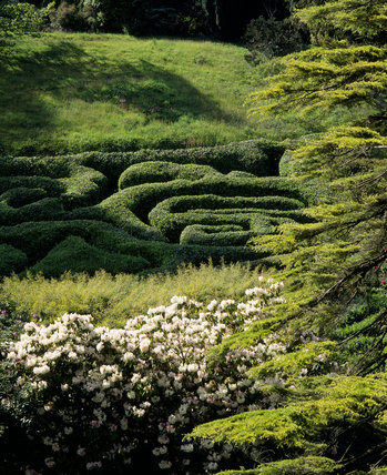 Maze in the garden at Glendurgan