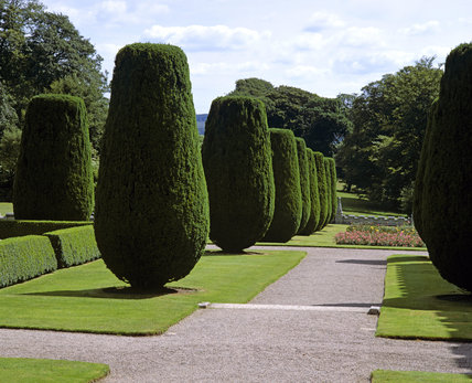 Topiary in the formal gardens at Lanhydrock showing a row of finely clipped evergreens by a gravel path, flower bed, lawns and hedges