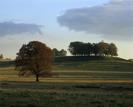 A view of the parkland at Petworth, a low sun is casting interesting shadows across the scene, with a group of trees silhouetted against the skyline