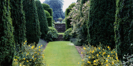 The terrace steps in the Yew Garden at Hinton Ampner taken in June, showing a classical ornament at the end of the yew tree vista and yellow Hypericum `Hidcote'