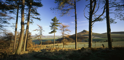 A panoramic view of Roseberry Topping, viewed through several scraggy tree trunks in the foreground
