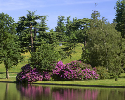 The Amphitheatre seen from across the lake at Claremont, the layout is partially obscured by trees and a pink rhododendron