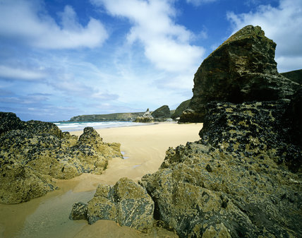A sweep of the beach of Bedruthan Steps showing the rock stacks, home to hundreds of mussels
