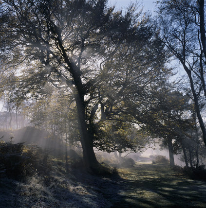 Sunlight streaming through trees shrouded in mist in Greenwood, on the Longshaw Estate