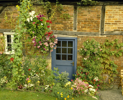 A typical cottage door in Lacock Village, Wiltshire, with roses clustered around the entrance and a typical cottage garden in front