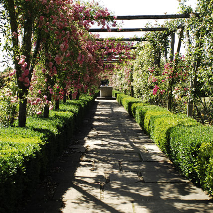 The Rose Pergola in summer at Polesden Lacey, Surrey