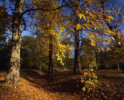 Autumn trees at Claremont, Berkshire