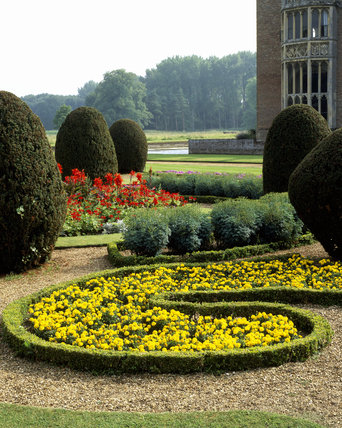 French parterre - small clipped hedges surrounding plantings of  Tagetes 'Yellow Boy' & Canna indica & Rue with clipped Yews and corner of Oxburgh Hall