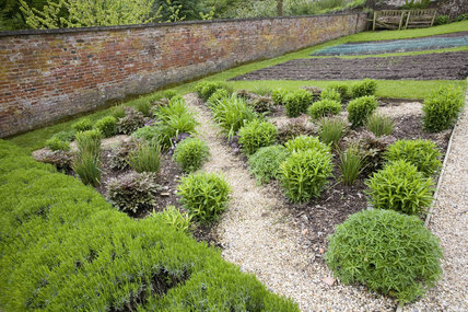 Herbs growing in the garden at Stourhead