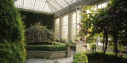 The Orangery at Montacute House with standard fuschias groowing in raised beds surrounded by ivy