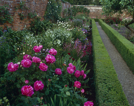 The Rose Garden at Mottisfont Abbey with rosa