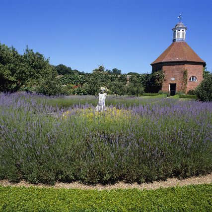 The Walled Garden at Felbrigg, with lavender surrounding a statue, and the Dove-House in the background
