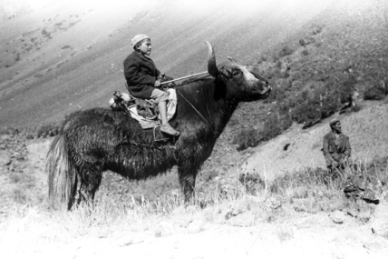 Boy riding a yak