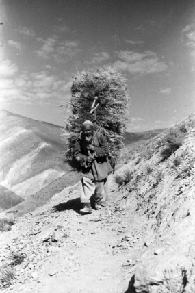 Hazara man carrying fodder