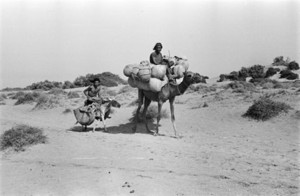 Arab men taking goods to market