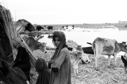 Suaid people with livestock
