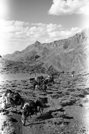 Herki nomads migrating