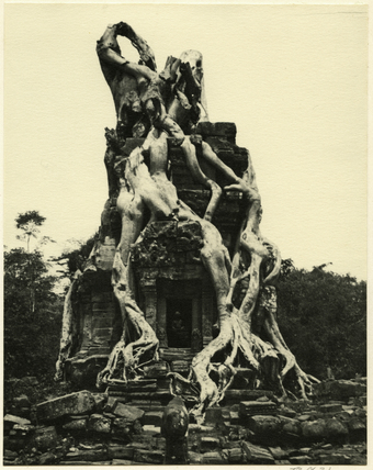 Tree roots at Angkor