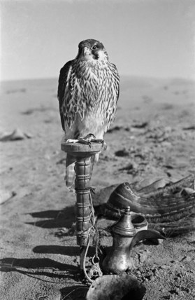 Falcon with coffee pot