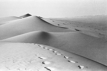 Camel tracks in the Empty Quarter