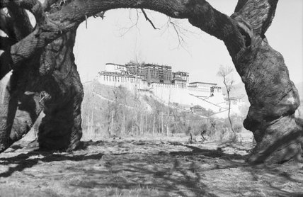 View of Potala seen through arc created by thick branch of tree