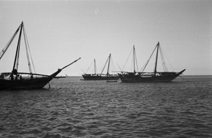 Profile view of dhows (sailboats) ...