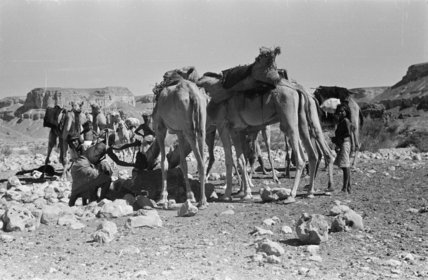 View of Sa'ar Bedouin watering ...