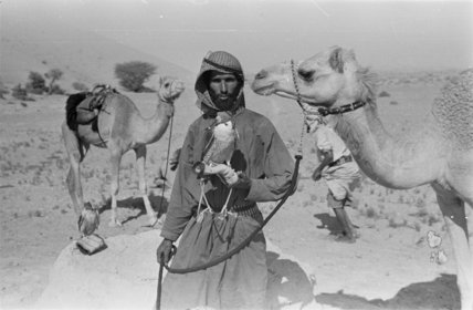 Portrait of an Arab falconer ...
