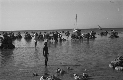 View of people collecting coral ...