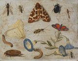 Insects, by Jan van Kessel I
