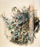Study of a portion of tree trunk, by Ruskin