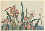 Irises and grasshopper, by Hokusai