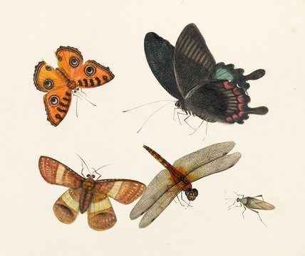 Butterflies, moth, dragonfly and a beetle, Chinese