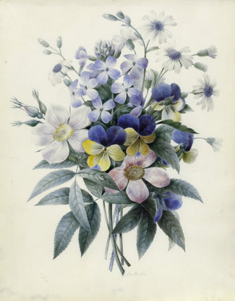 Single roses, violas and cinerari, by Nathalie d'Esmenard
