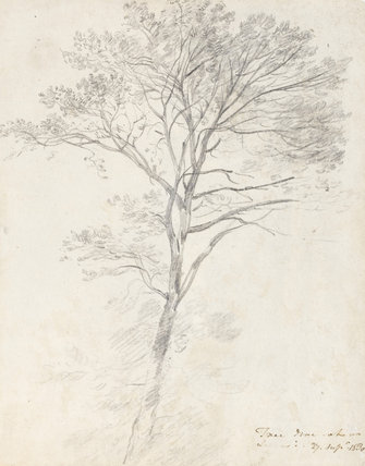 An Ash Tree, by Constable