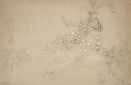 Study of a Bough Laden with Apples, by Samuel Palmer