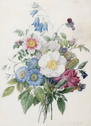 Blue Asters, Rosa Spinosissima, by Louise d'Orleans