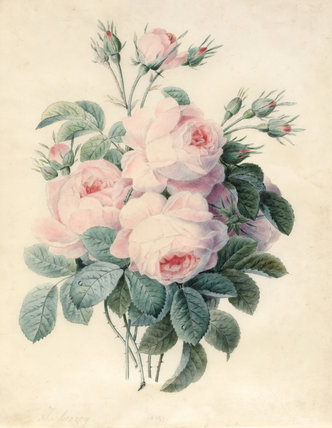 Spray of Centifolia Roses, by J. Herzog