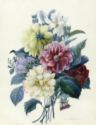 Mixed Dahlias, by Elisa-Emilie Lemire