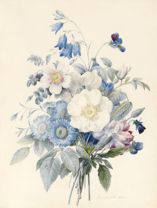 Blue asters, carnation and a wild rose, by Redoute