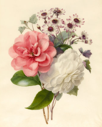 A spray of flowers, Camellias and Cincinaria, by Marie Anne