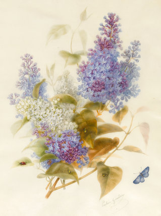 Spray of Lilac, by Pauline Gerardin