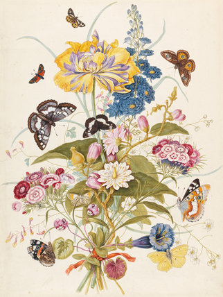 Flowers and butterflies, by T.C. Robins