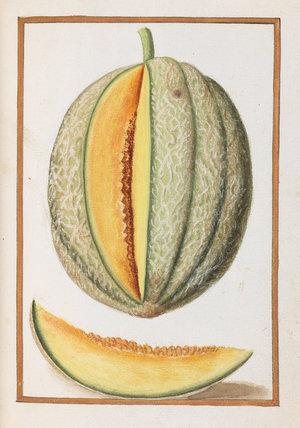Melon, by Antoine du Pinet