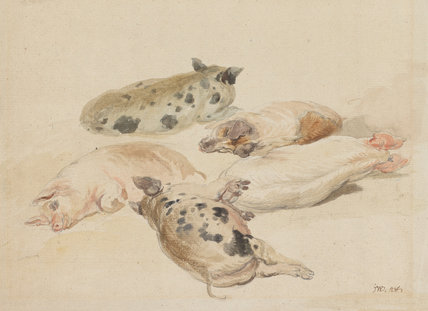 Studies of five pigs, lying down, by James Ward