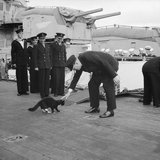 Winston Churchill stops 'Blackie', ship's cat of HMS PRINCE OF WALES, crossing over to a US destroyer during the Atlantic Conference, August 1941.