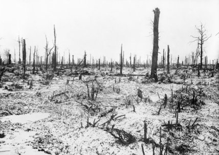 Trones Wood after a snow storm, Somme, November 1916.