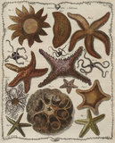 'Asterias', Genus XVI, The Genera vermium, London 1783 (tab. 10)