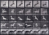 Horses rearing, etc.; from 'Animal Locomotion. An Electro-Photographic Investigation of Consecutive Phases of Animal Movement 1872-1885'