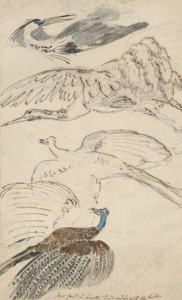Four drawings of birds in flight
